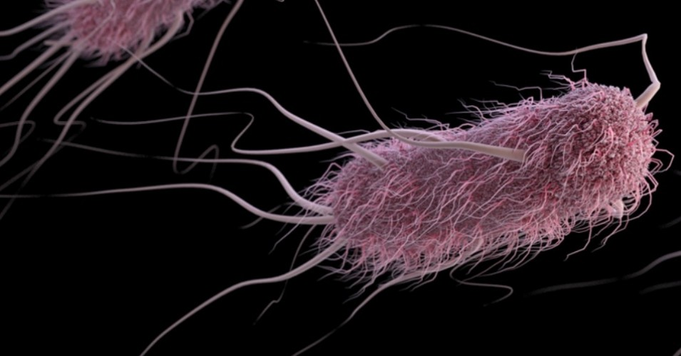 "E. coli. The World Health Organizations says antibiotic resistance is ""one of the biggest threats to global health, food security, and development today."" (Photo: U.S. Centers for Disease Control and Prevention)"