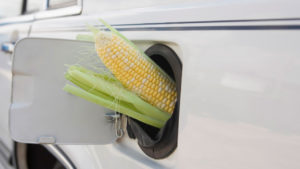 Biofuels: An Eco-Friendly Alternative to Fossil Fuels?
