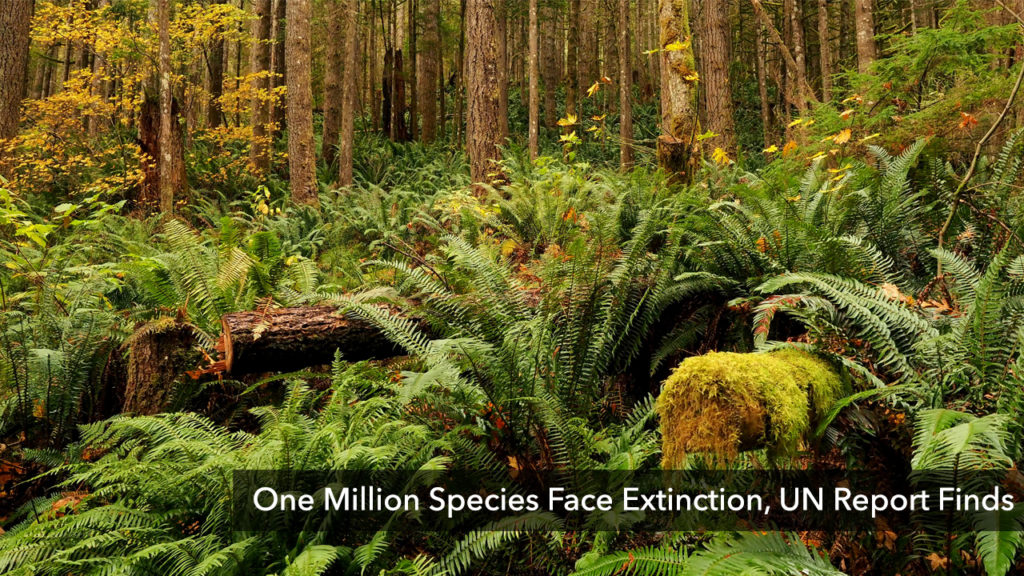 One Million Species Face Extinction, UN Report Finds