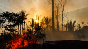 US and Brazil Propose to Fight Amazon Deforestation with Development