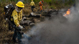 Firefighters in Brazil put out a forest fire